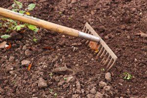 Jardinier en herbe
